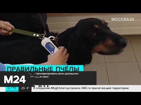 В России начнут маркировать домашних животных Москва 24