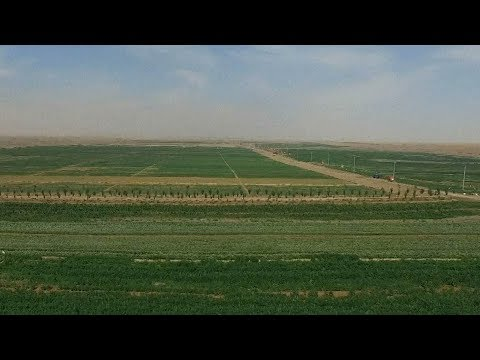 New technology in China turns desert into land rich with crops