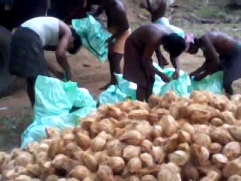 coconut exporter in india com