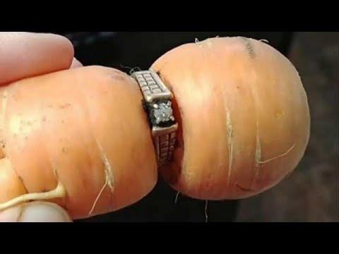 يورو نيوز:سيدة تعثر على خاتمها الماسي في ثمرة