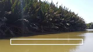여기는 조호바루# 티오만섬 관문 머싱 강에서
