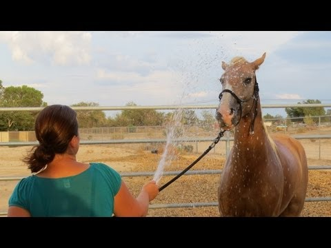 Malibu - BLM Mustang - Training Day 18 - First Time Having Mane Washed