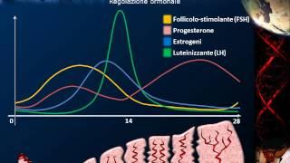 Embriologia - Lezione 1: Ciclo ovarico; spermatozoo; fecondazione
