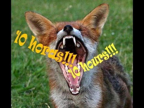 10 hours Ylvis - The Fox (What Does The Fox Say) - 10 horas