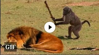 Download Funny Animals ; Funny video Mp3 and Videos