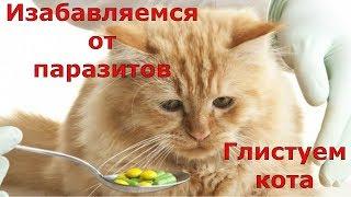 У кошки глисты, как лечить? Лечение и профилактика.