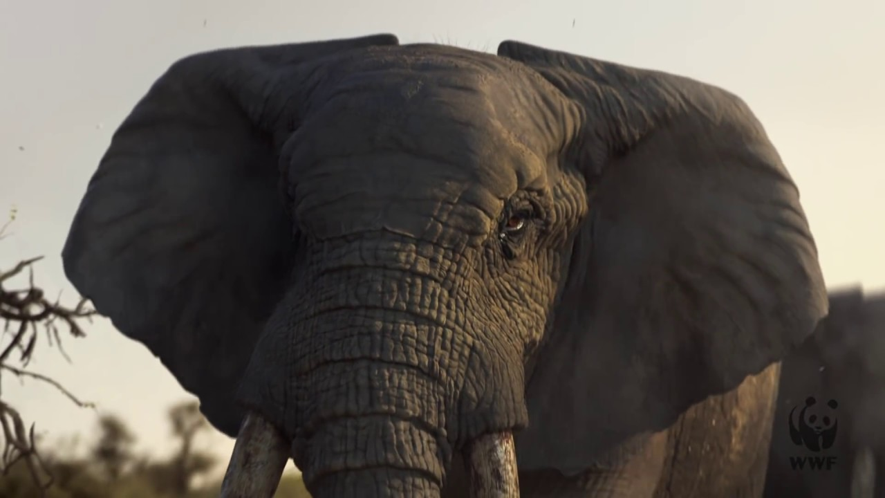 This Christmas Commercial Featuring a Crying Elephant Is the Saddest One of the Season foto
