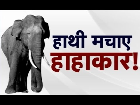 Angry Elephant Attack Humans In Surguja Chhattisgarh !! Aap Ki Baat