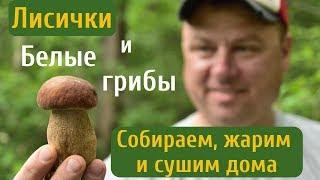 Лисички и белые грибы. Как сушить грибы в домашних условиях.