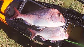 Snapper on the drop - Kayak Fishing Australia
