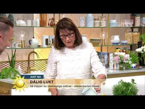 Så slipper du dålig lukt i avloppet - Nyhetsmorgon (TV4)