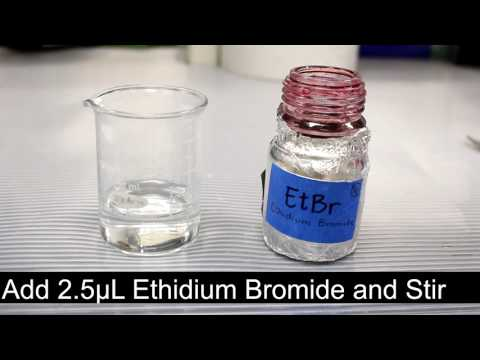 Making an Ethidium Bromide Agarose Gel