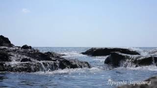 Море. Шум волн. Морской бриз. Прибой. Крик чаек. Новый Свет  Крым. Релакс. Медитация.
