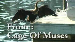 Time Reverie: Anhinga :  Bury Me Standing - On The Pithlachascotee River:************* A.J.Croce: