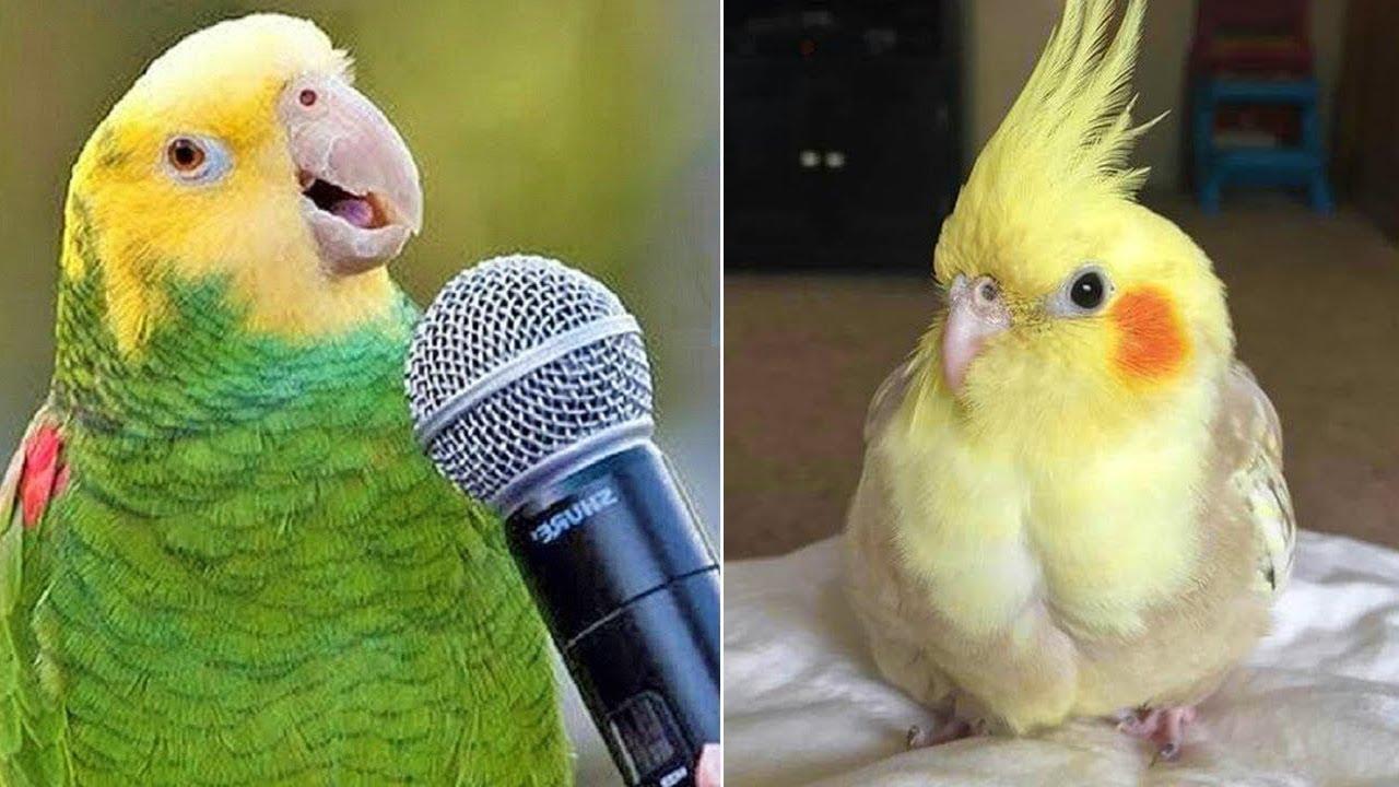 Baby Animals 🔴 Funny Parrots and Cute Birds Compilation (2021) Loros Adorables Recopilación #31