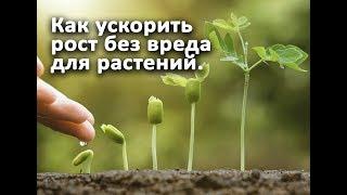 как ускорить рост без вреда для растений