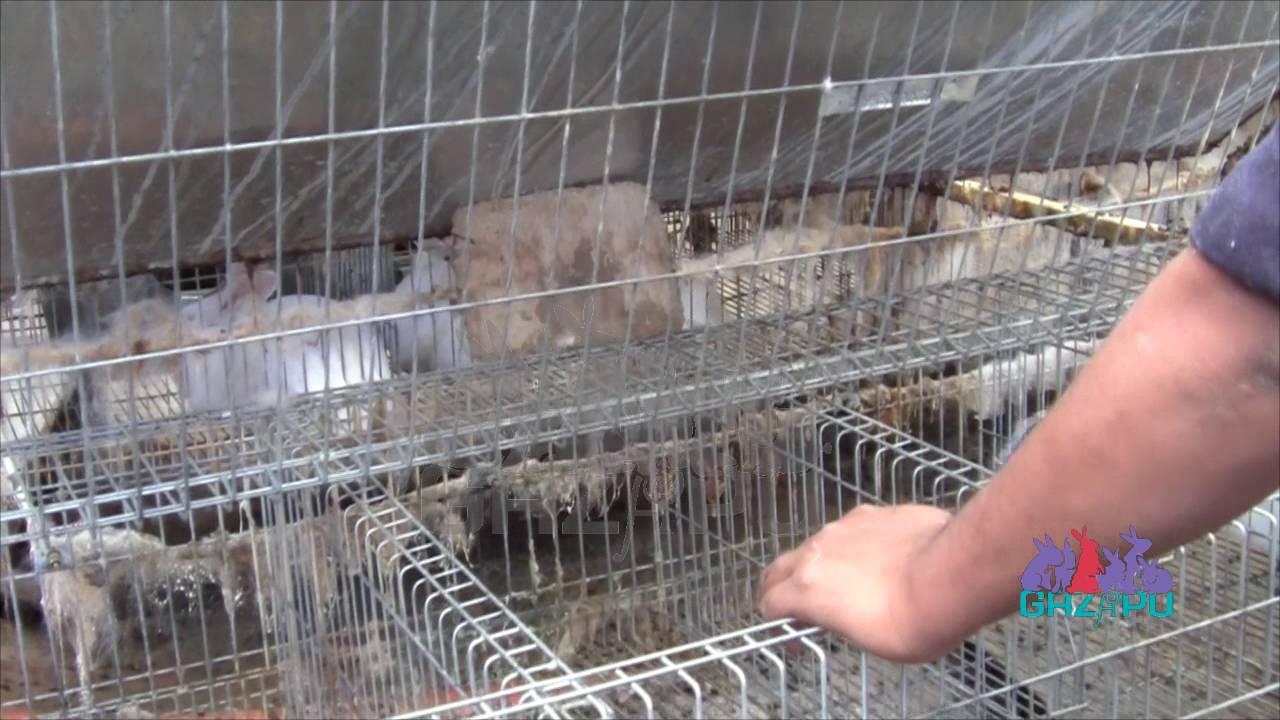 Video Limpieza De Jaulas De Conejos Youtube