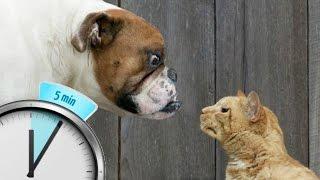 Кошки против собак  Посмотреть