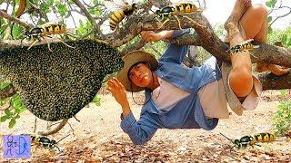 """Bắt Ong Rừng Kiểu Này Thì Tuyệt Chủng Mất .Chỉ 1 Nốt Nhạc """"Quá Nhanh Quá Nguy Hiểm"""" . Best Catch Bee"""
