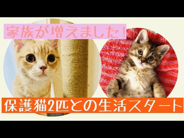 【新しい家族の紹介♪保護猫達との生活】保土ヶ谷グロー斉藤