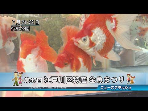 第47回 江戸川区特産金魚まつり