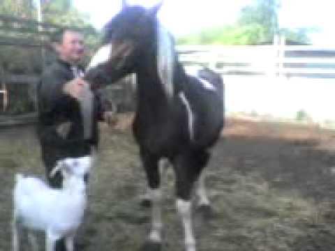 Вопрос: Как заставить лошадь доверять вам?