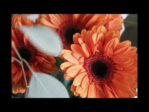 Download Flower  188