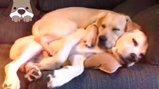 Картинки собак:)