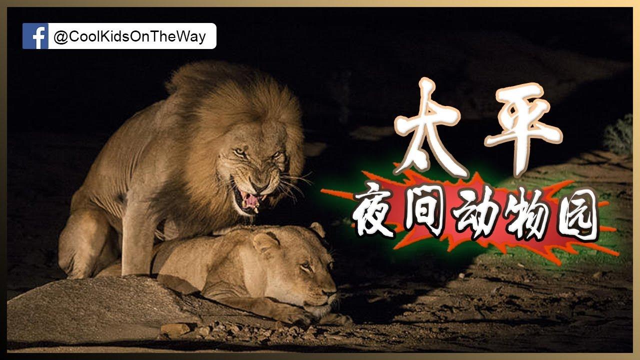 [霹靂]一日遊 -太平夜間動物園真係好正! |二人行