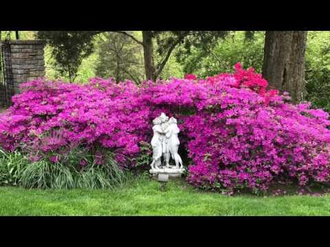 Sumptuous Garden