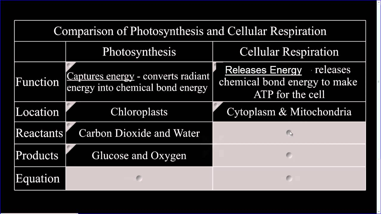 What are the products of photosynthesis and respiration - What Are The Products Of Photosynthesis And Respiration 30