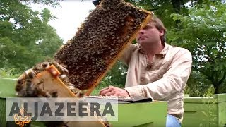 🇨🇦 Canadian beekeepers face bleak future