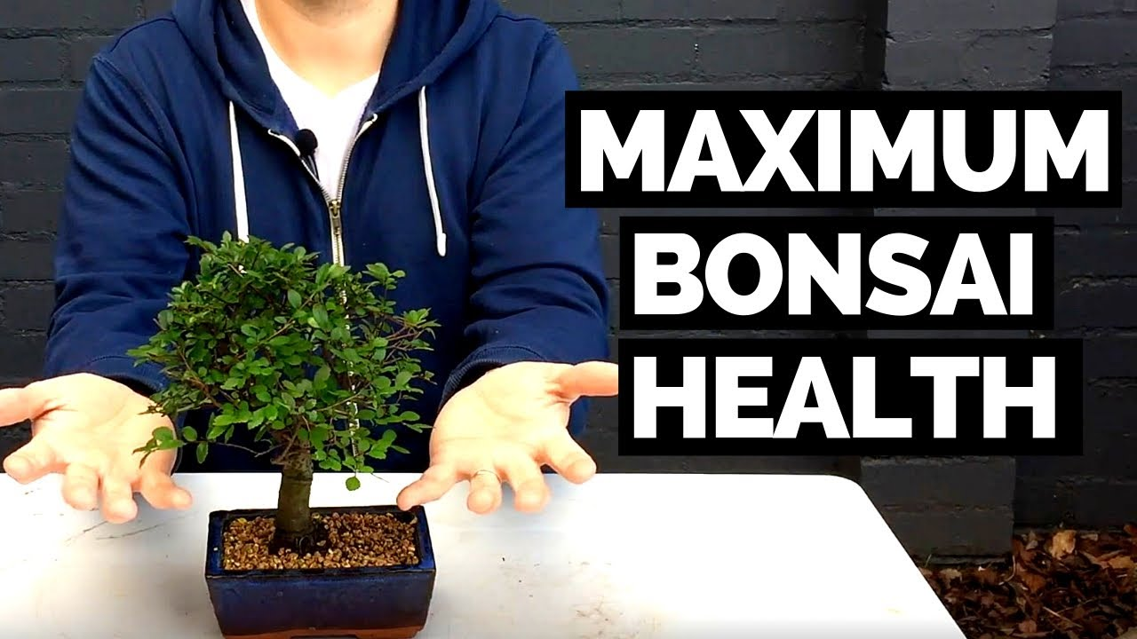 Bonsai Tree Health Effective Slip Potting Bonsai Trees For Max Health Youtube