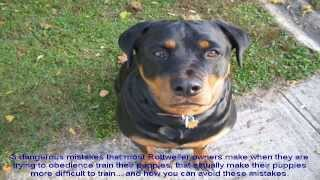 Puppy Rottweiler Training Tips List