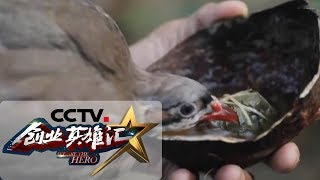 《创业英雄汇》 20190607| CCTV财经