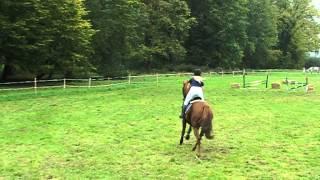Hubertus Brody 11.10.2014 derby, Emilia Ossowska i Hel