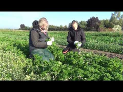 Organic farming harvesting a flourishing future in Germany