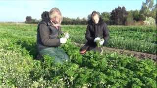 Organic farming harvesting a flourishing future in Germany