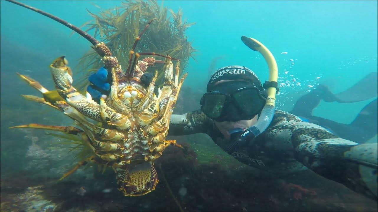 Spearfishing Vic: Kings, Tuna and Crays