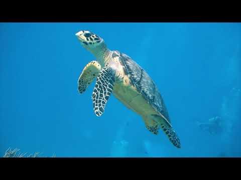Turtle Plastics Corporate Identity