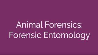 Animal Forensics - Forensic Entomology