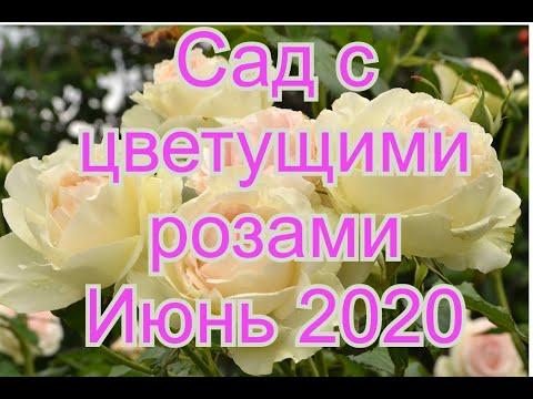 Сад с цветущими розами.Названия сортов роз и комментарии.Июнь 2020
