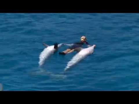 Dolphinarium Valencia Spain