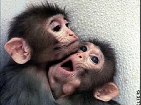 Cute Baby Monkeys Youtube