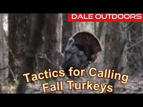 Tactics For Calling For Fall Turkeys