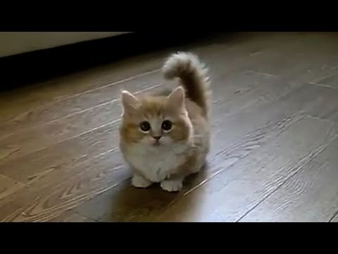 TOP 10 BEST CAT VIDEOS OF ALL TIME! Travel Video