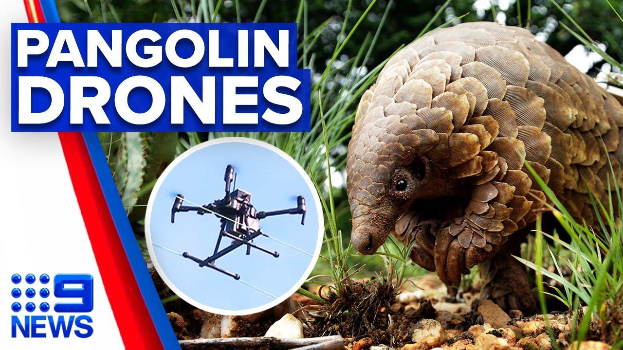 Backyard invention to protect endangered pangolin population | 9 News Australia