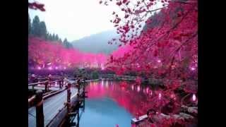 Tôi Vẫn Yêu Hoa Màu Tím - Hoàng-Trọng - Minh-Châu - NTB