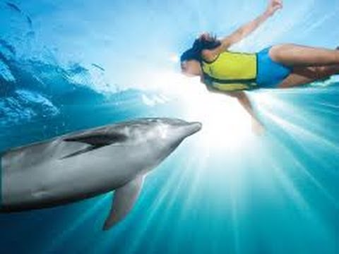 Discovery Cove, Orlando, Florida - Best Travel Destination