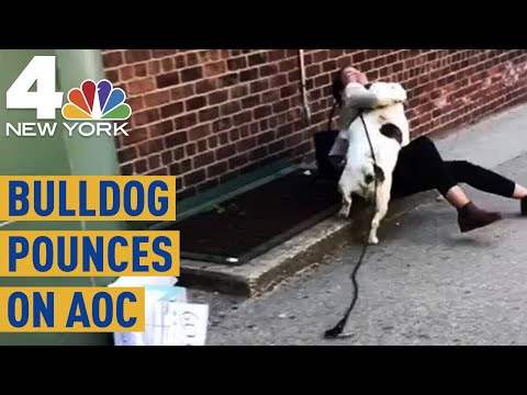 Alexandria Ocasio-Cortez Interrupted on Call by Giant Bulldog  NBC New York